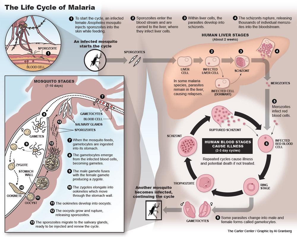 Malaria and Lymphatic Filariasis in Hispaniola | The Carter Center